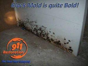 911 Restoration - mold removal- Colorado Springs- black mold